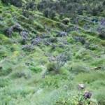 green faling-