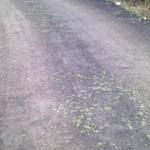 tarring of road-