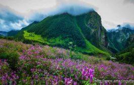 फूलों की घाटी में रिकार्ड पर्यटक उमड़े