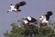 औद्योगिक नगरी में बनेगा आकर्षक पक्षी विहार