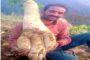 किसान वीरेंद्र के खेत में 12 किलोग्राम की मूली