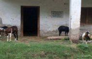 गांवों में सामुदायिक भवन बने गोशाला