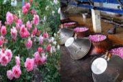 गुलाब की खेती, इत्र का व्यापार