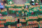 टमाटर से सोलन- सिरमौर के किसान निहाल