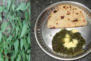 पहाड़ीजनों की पसंदीदा डिश है- बिच्छु बूटी का साग